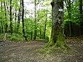 Wanderwege - panoramio.jpg