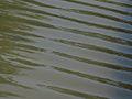 Waves in Jerusalem Independence Park-2 (7431134632).jpg