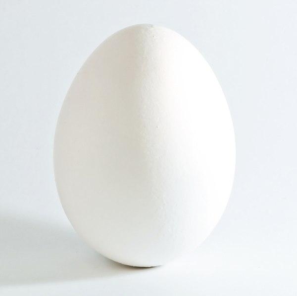File:White chicken egg square.jpg