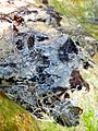 WikiProjekt Landstreicher Wasserfall Hinang 42.jpg