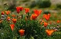Wild Bouquet (33772507561).jpg