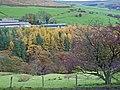 Wincle - valley of Highmoor Brook - geograph.org.uk - 280589.jpg