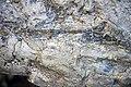 Winooski Dolomite (Middle Cambrian; Chimney Corner, Vermont, USA) 3.jpg