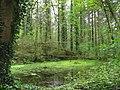 Woodland pool - geograph.org.uk - 789005.jpg