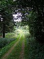 Woodland track in Cockerdale Wood - geograph.org.uk - 516090.jpg