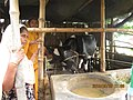 Workshop of Cattle rearing by NGO in Bangladeshi village 2015 14.jpg