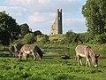 Yellow Steeple and Donkeys.JPG