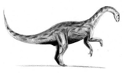 Yunnanosaurus BW.jpg