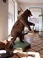 Zámek Vlašim - preparovaný medvěd.jpg