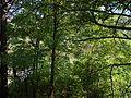 Zolotonis'kyi district, Cherkas'ka oblast, Ukraine - panoramio (356).jpg
