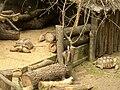 Zoopark Zajezd CZ Geochelone pardalis pardalis 038.jpg