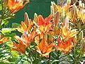 """Пламък"" в градината - panoramio.jpg"