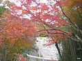(千葉県) もみじロードにて。今年も綺麗に色づいています。 - panoramio.jpg