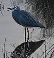 (1)Heron-999.jpg