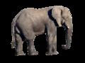 Éléphant (détouré).png