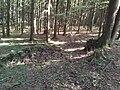 Čížovské lesy, hromada kamení.jpg