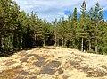 Валаам, лес, каменистая поляна, мох, сосны, природа.jpg