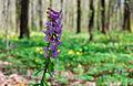 Весна у Шпиківській дубині.jpg