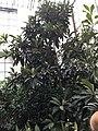 Всередині теплиці ботанічного саду.jpg