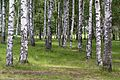 Вырица - panoramio (14).jpg
