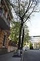 Група вікових дерев береки, Банкова,2.JPG