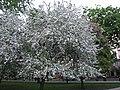 Дерево (495967478).jpg