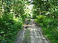 Дорога на север от Пробы - panoramio.jpg