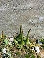 Загадочное растение на Байкале.jpg