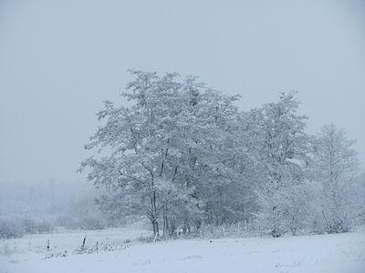Зимовий день в Великій Кручі.jpg