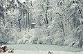 Зимовий став, дендропарк Олександрія, Біла Церква.jpg