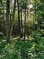 Лес усадьбы Сергиевка.jpg