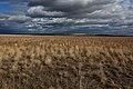 Оренбургская степь в октябре - panoramio.jpg
