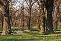 Орлівщанські дубові насадження-2.jpg