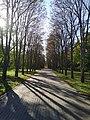 Парк Косенко, аллея.jpg
