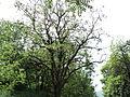 Парк шума Гази Баба во мај (4).JPG