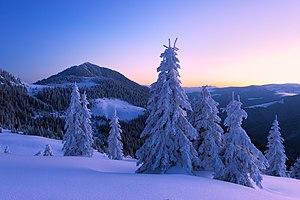 Петрос Мармарошський зимовим ранком.jpg