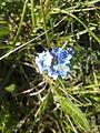 Райский цветок.jpg