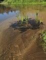 Река Илеть 14.jpg