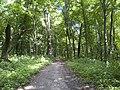 Украина, Киев - Голосеевский лес 127.jpg