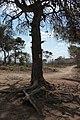 פארק הכרמל 4 - גנים לאומיים בצפון הארץ - אתרי מורשת 2016 (567).jpg