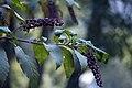 عکس از گلها و گیاهان باغ بوتانیکال تفلیس - گرجستان 18.jpg