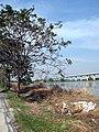 กองขยะ ข้างบ่อปลา - panoramio.jpg