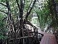 ต้นโกงกาง ที่เทียนทะเล - panoramio.jpg