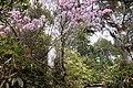 アカヤシオが彩る登山道2.jpg