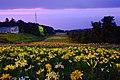 オーンズ春香山ゆり園(Onze Harukayama lily garden) - panoramio (10).jpg