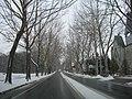 プラタナス 冬路 (Platanus avenue) - panoramio.jpg