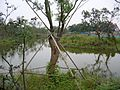 七桥翁湿地公园(5) - panoramio.jpg