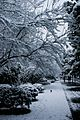 七莘路雪景 - panoramio.jpg