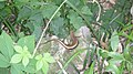 四脚蛇 - panoramio.jpg