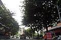 广东省江门市S271公路景色 - panoramio (6).jpg